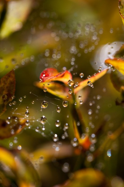 Drops of dew